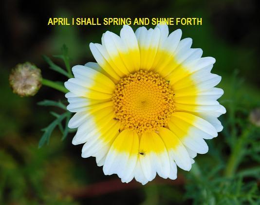 APRIL SHINE FORTH